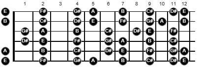 wayne krantz guitarist
